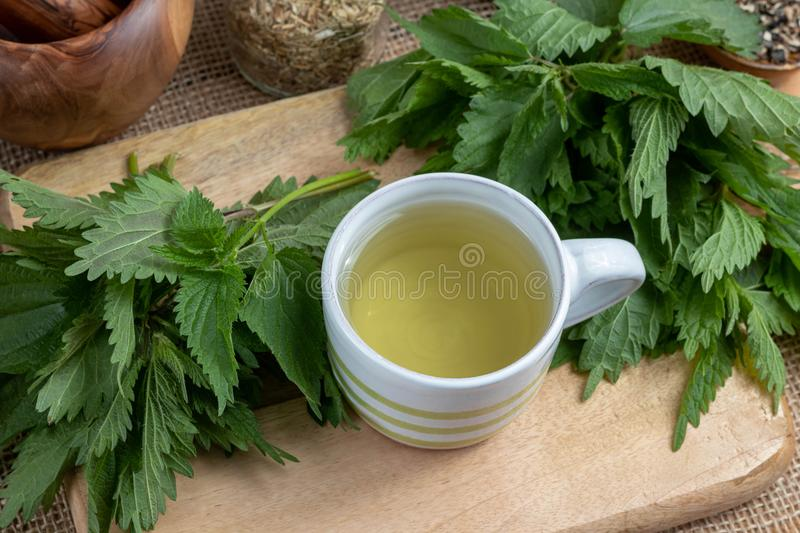 A cup of nettle tea with fresh plant. On a table royalty free stock photos