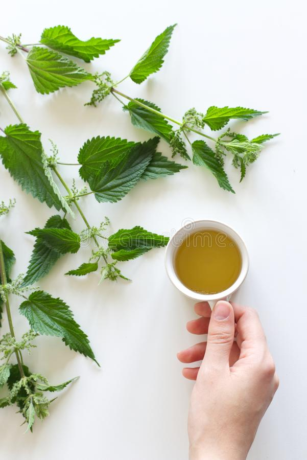 A cup of nettle tea on a white table, with fresh stinging nettles in the background. Medicinal plant. The concept of. A cup of nettle tea on a white table, with stock photography