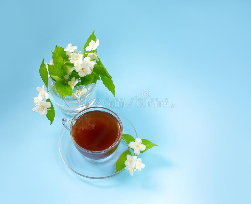 Cup with tea on a blue background. A small bouquet of twigs of blooming jasmine. Summer mood. View from above stock photography
