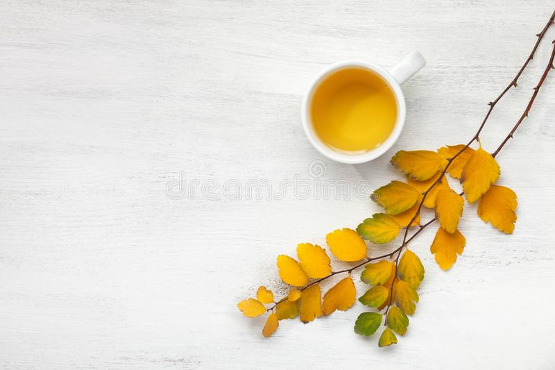 Cup  of tea and branches with small colorful autumn leaves Spiraea Vanhouttei on white wooden table with empty space for text or royalty free stock photo