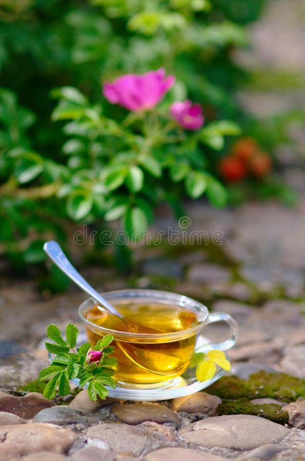 Download Cup Of Tea With Canker-bloom Stock Image - Image: 25901185