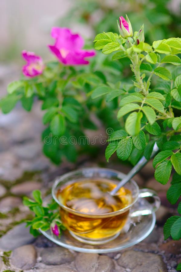 Cup of tea with canker-bloom