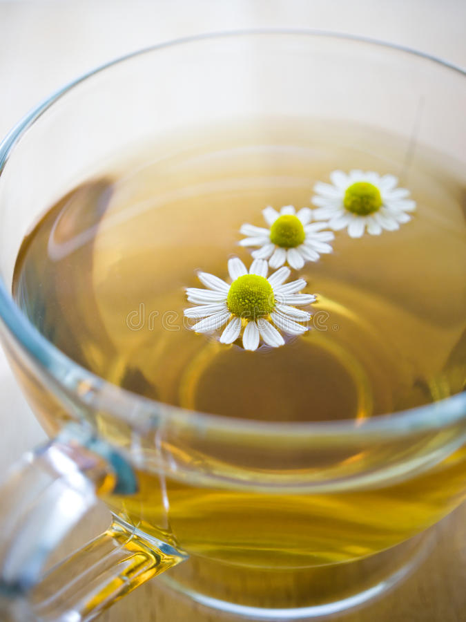 Cup of tea with chamomile royalty free stock image