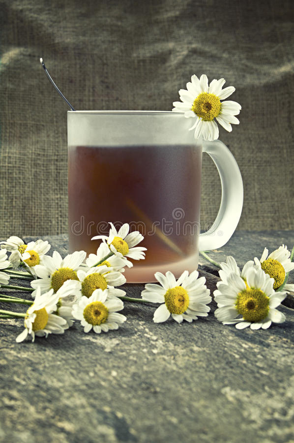 Cup of tea and chamomile flowers royalty free stock photography