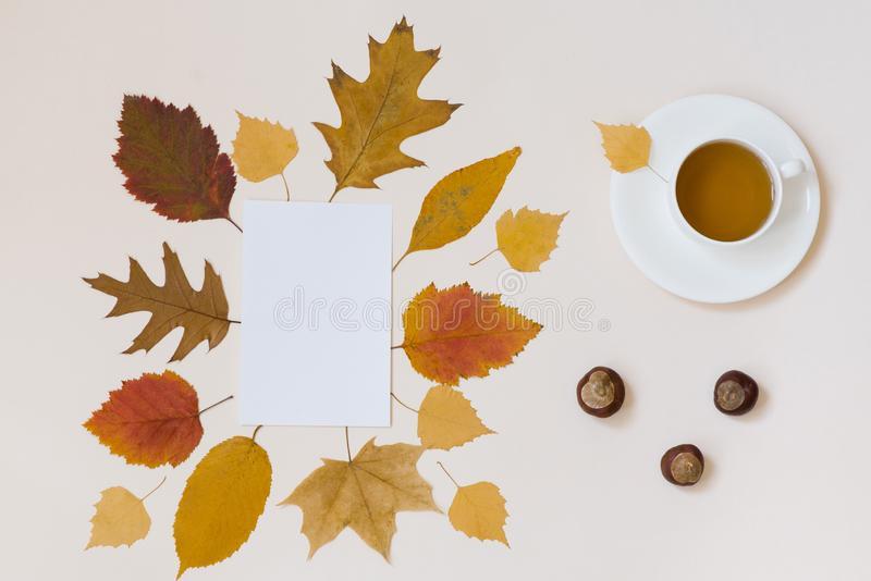 A Cup of tea, a clean white sheet of paper, chestnuts, Golden autumn leaves, peanuts in a shell on a beige background flat top vie royalty free stock photos