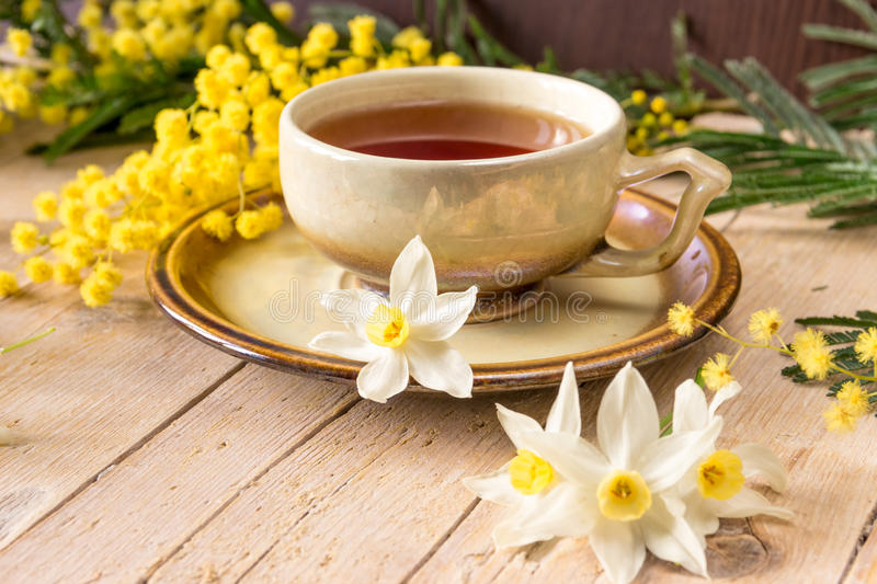 Cup of tea decorated with a sprig of mimosa and narcissus. Mimosa and cup of tea in the International Women's Day on 8 March royalty free stock photo