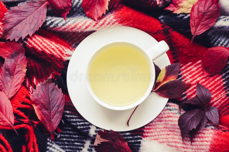 Cup of autumn tea. Cup of tea with fallen leaves on warm woolen blanket. Hot drink for rainy days. Hygge concept, autumn mood. Cozy morning at home. Warm and stock photo