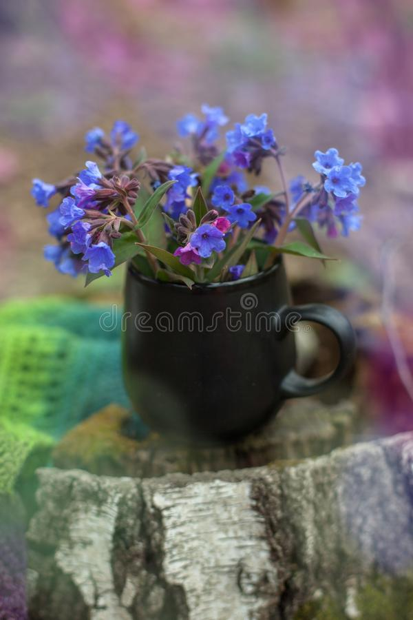 Cup of tea with flowers and warm plaid blanket on wooden stump, picnic in the autumn forest. Fall weekend. Photo toned, selective royalty free stock photos
