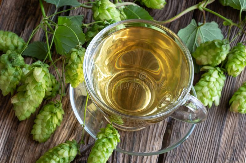 A cup of tea with fresh wild hops stock photos