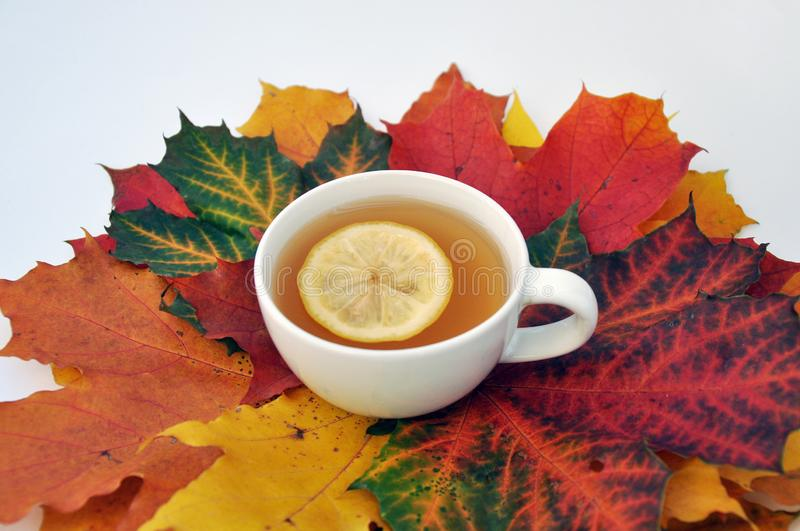 Cup of tea with lemon with autumn leaves stock image