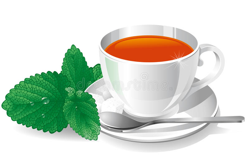 Download Cup of tea with mint stock vector. Image of beverage - 14809493