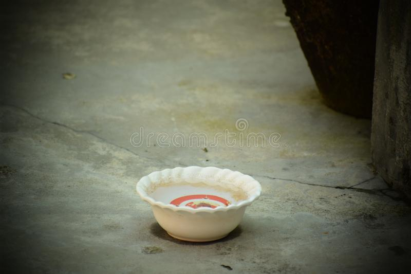 A cup of water for Birds royalty free stock image