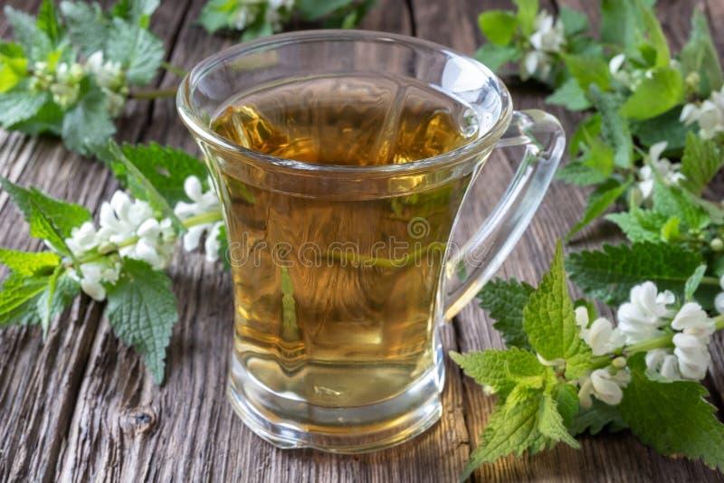 A cup of white dead-nettle tea with fresh plant. A cup of white dead-nettle tea with fresh blooming Lamium album plant stock images
