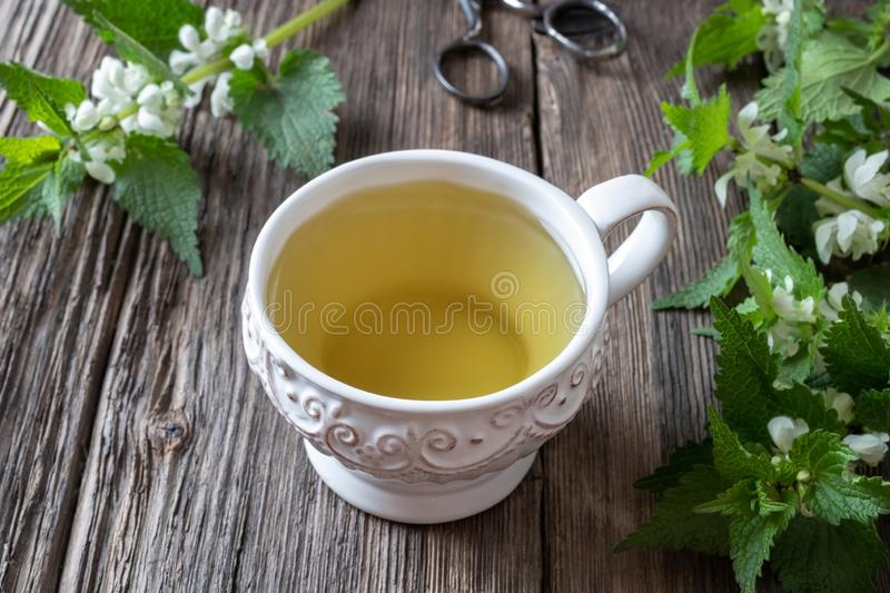 A cup of white dead-nettle tea with fresh plant. A cup of white dead-nettle tea with fresh blooming Lamium album plant royalty free stock images