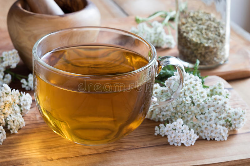 A cup of yarrow tea with fresh yarrow stock images
