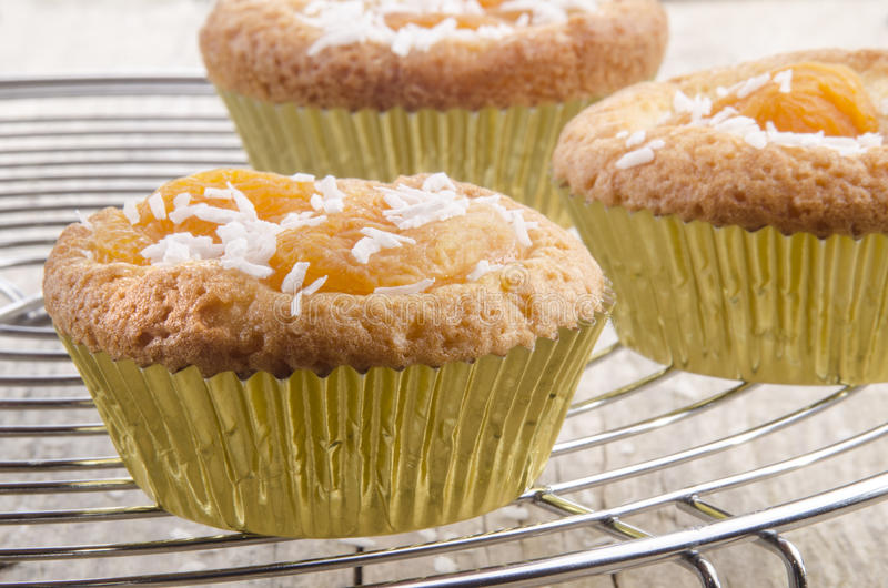 Download Cupcake With Dried  Organic Apricots Stock Image - Image: 28438391