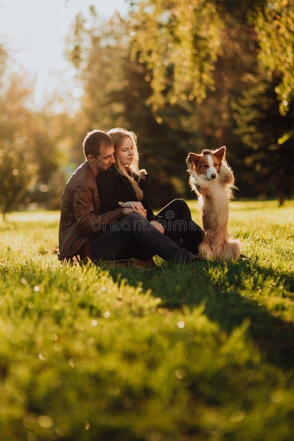 Cuple bonito com cão border collie no campo verde no parque sob a árvore na luz do sol fotografia de stock