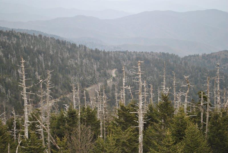 Cupola fumosa di Clingmans delle montagne immagine stock
