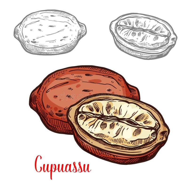 Cupuassu frukt skissar av nytt bär för tropiskt träd vektor illustrationer