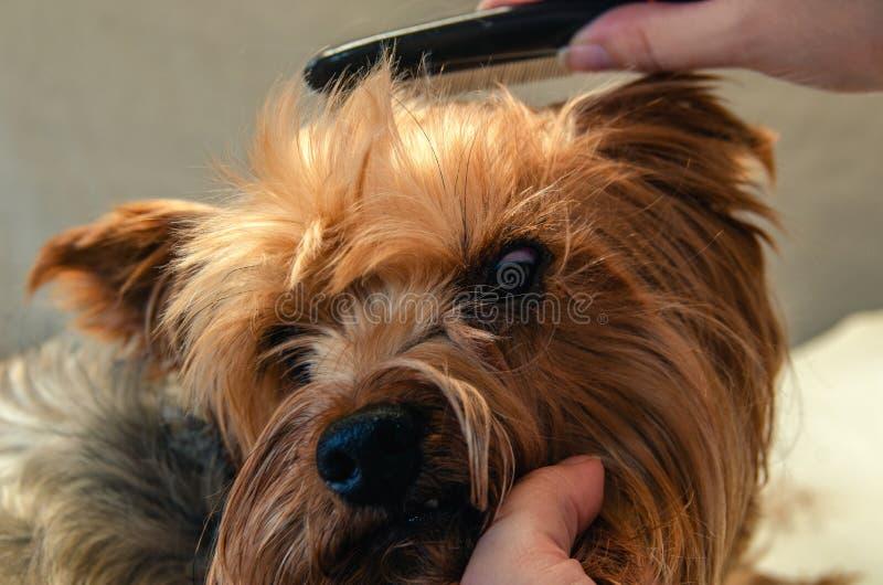 Cura del cane, primo piano immagini stock libere da diritti