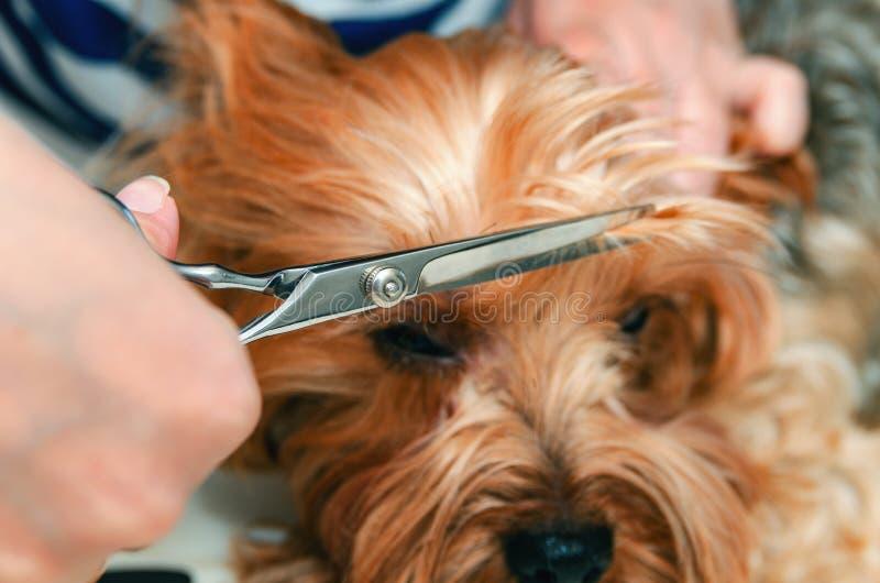 Cura del cane, primo piano fotografie stock