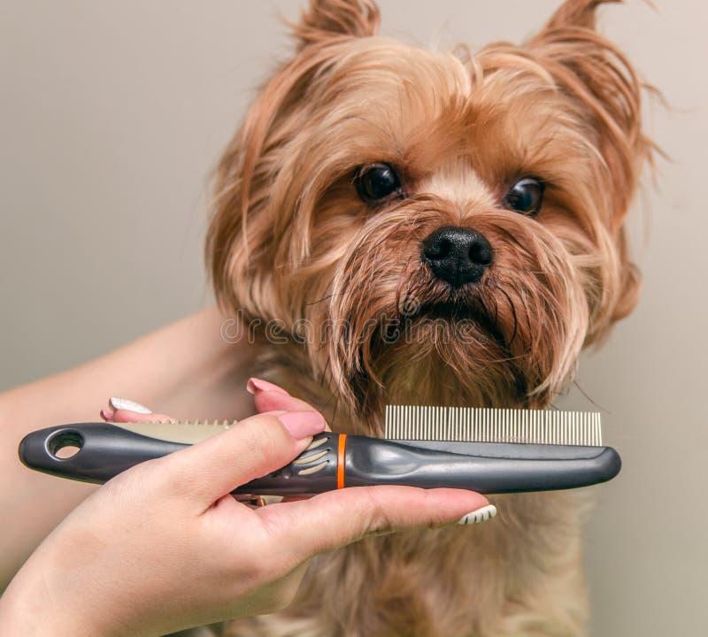 Cura del cane, primo piano immagine stock libera da diritti