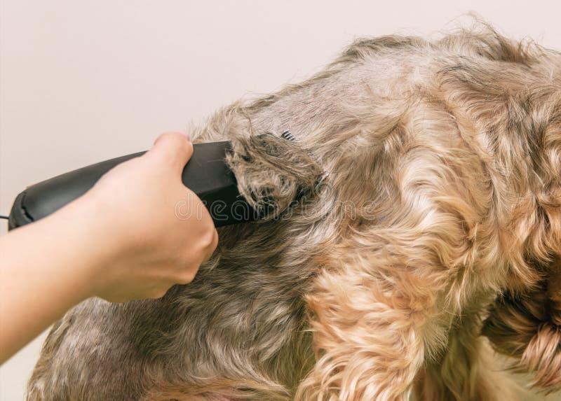 Cura del cane, primo piano immagine stock