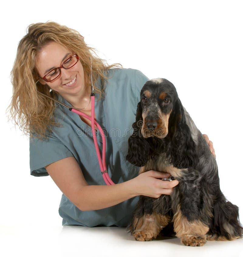Cura veterinaria immagini stock