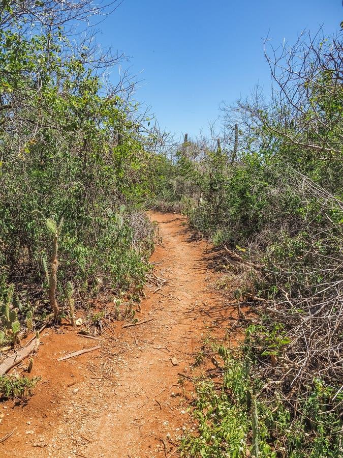 Curacao för banavägChristoffel nationalpark sikter royaltyfri bild