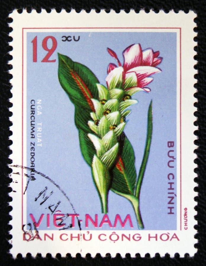 Curcuma Zedoaria, circa 1975. MOSCOW, RUSSIA - JANUARY 7, 2017: A stamp printed in Vietnam showing Curcuma Zedoaria, circa 1975 royalty free stock photos