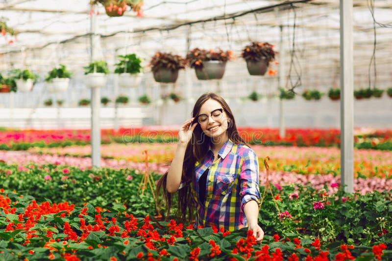 Cure d'uso di vetro di una ragazza per i fiori di Salvia in una serra immagine stock
