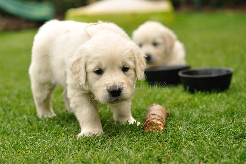Download Curios puppy stock image. Image of animal, puppy, close - 19588821