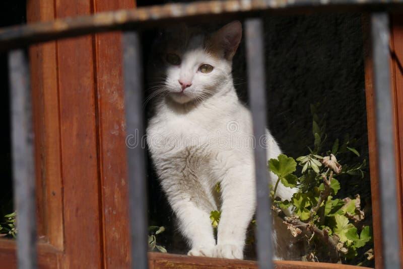 Curiosidade do gato imagem de stock