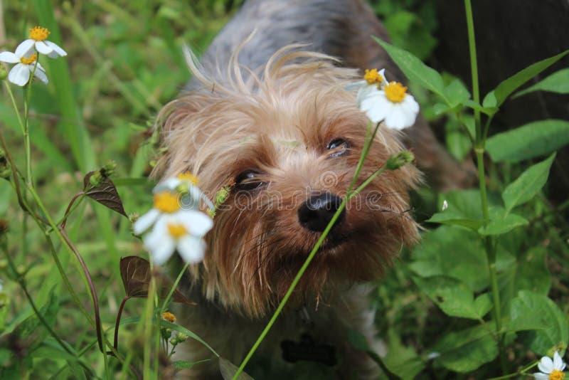 Curiosità canina fotografia stock libera da diritti