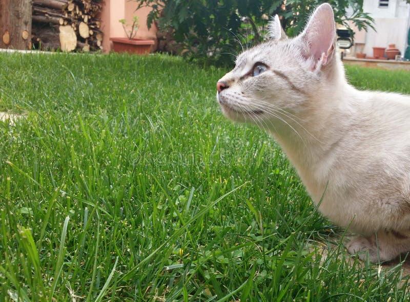Curiosité aux yeux d'un chat photographie stock