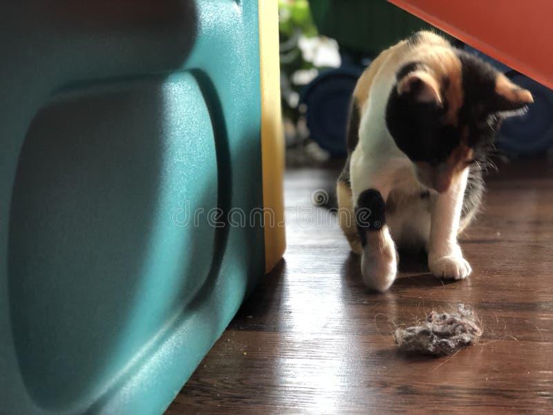 Curiosity killed the dust bunny stock photo