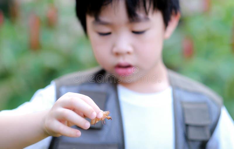 Curioso garotinho asiático olhando para a cigarra na mão no jardim Explorar o mundo, atividades ao ar livre imagem de stock royalty free