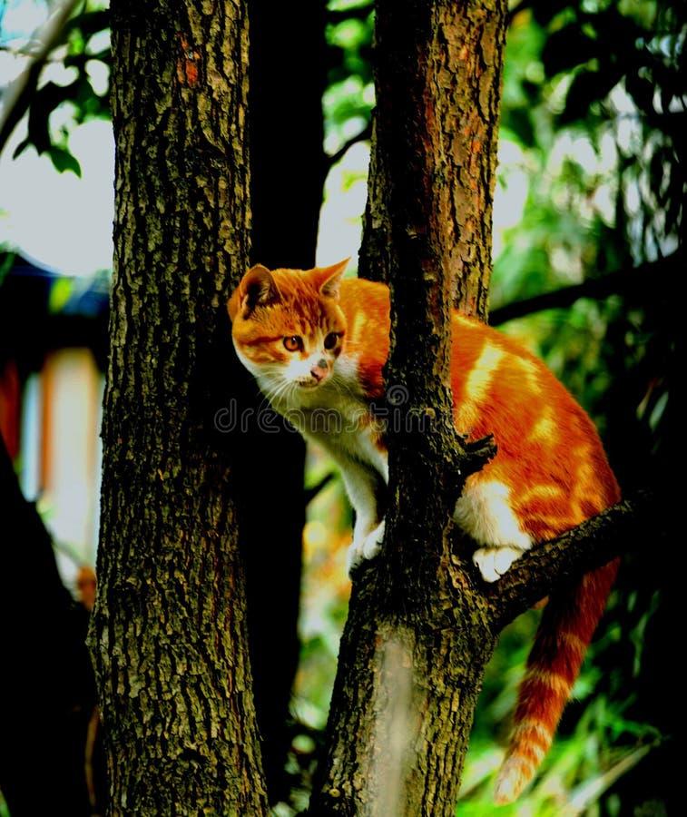 Curioso gatinho fotos de stock royalty free