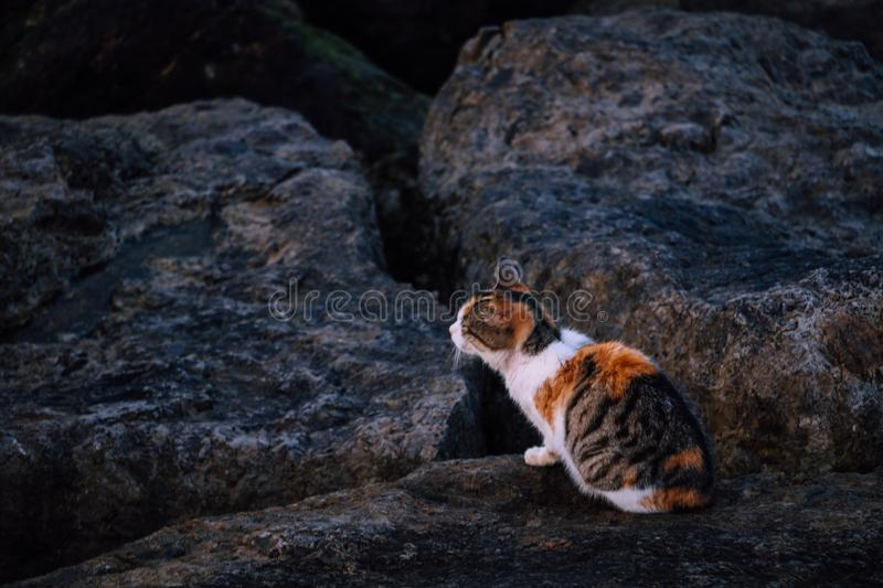 Beautiful cat by the beach stock photos