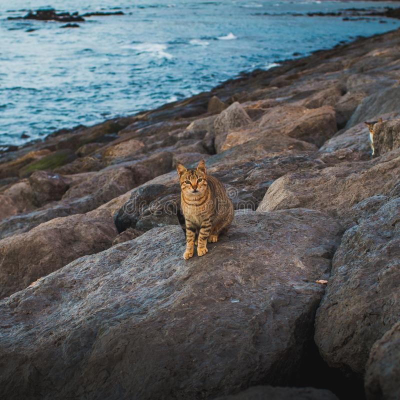 Beautiful cat by the beach stock photo
