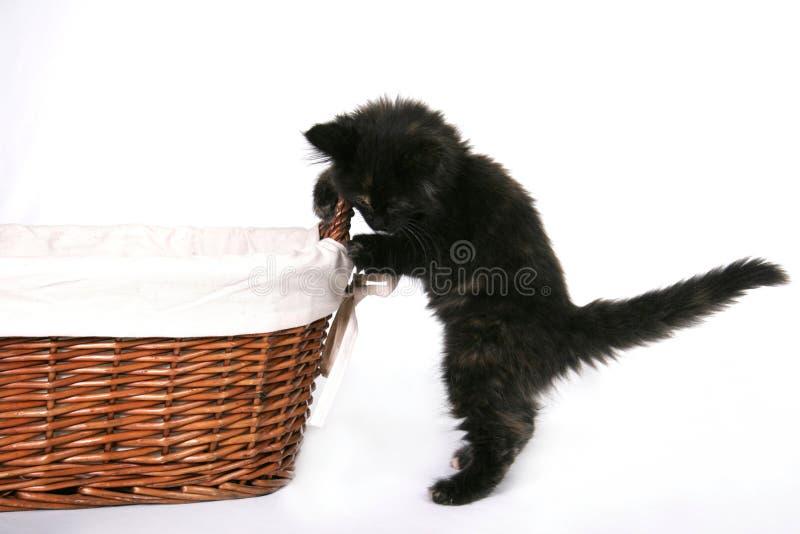 Curious Black Kitten royalty free stock photo