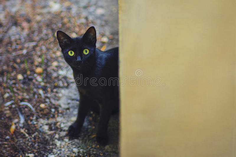 Curious cat in the backyard in a rainy autumn day. Curious cat sneaking in the backyard in a rainy autumn day stock photo