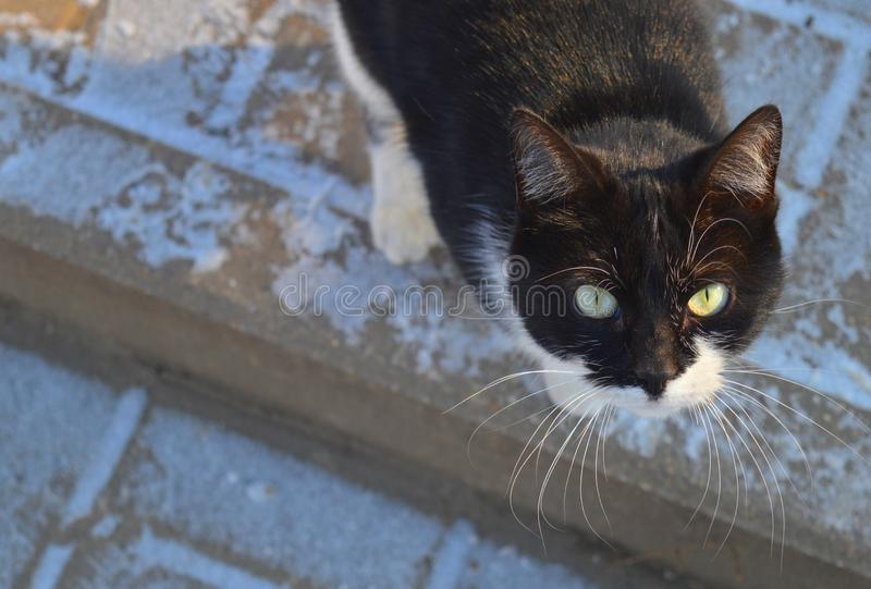 Curious cat with beautiful green eyes. Winter day. Curious cat with beautiful green eyes. Winter windless day. Cute animal with beautiful fur royalty free stock photography