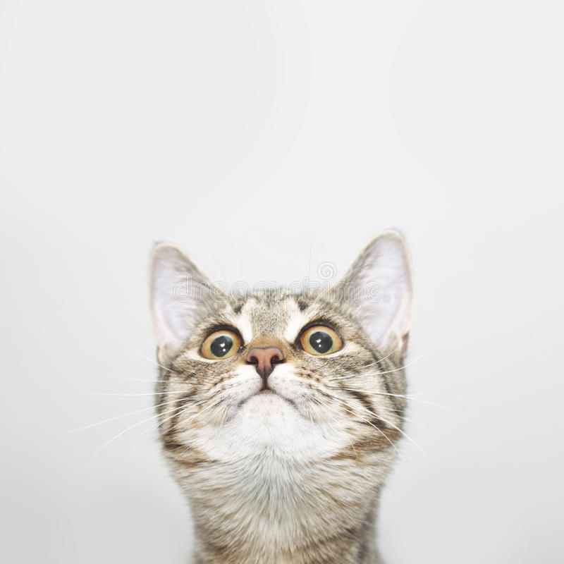 Curious cat face looking up royalty free stock images
