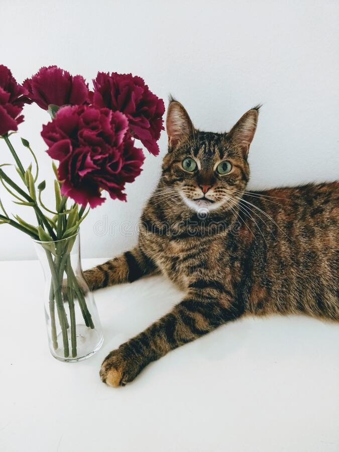 Curious  cat and flowers in vase. Curious cat and flowers in vase with white background royalty free stock image