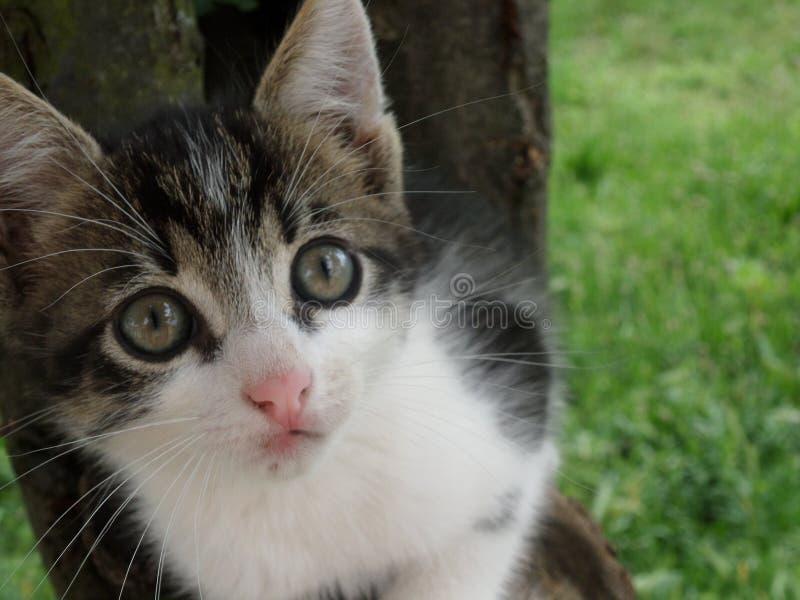 Curious cat stock image
