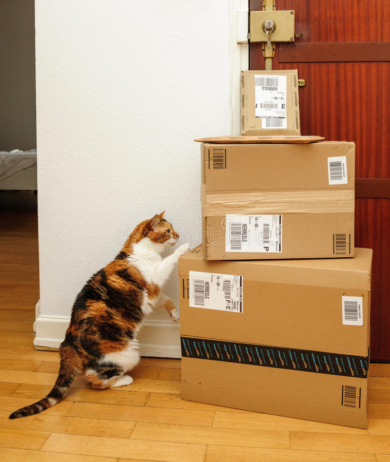 Curious cat inspecting multiple Amazon Prime boxes stock photos
