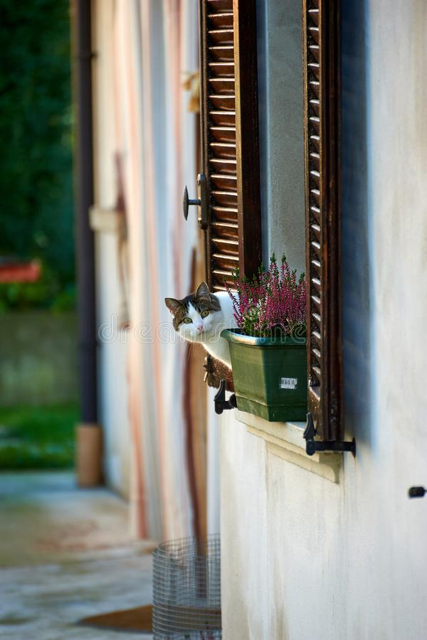 Curious Italian cat, ITALY/Fontevivo. A curious cat looking at the photographer from apartment`s window royalty free stock photo
