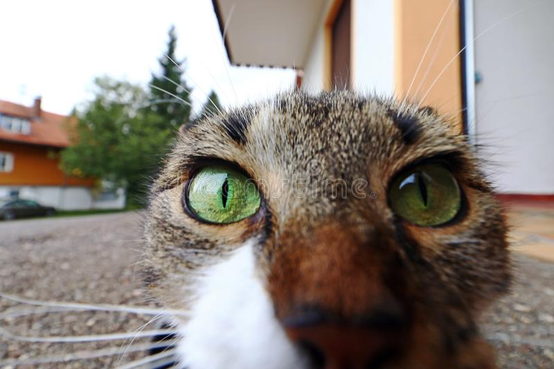 A curious cat looks straight into the camera`s lens. Funny cat photo stock photo