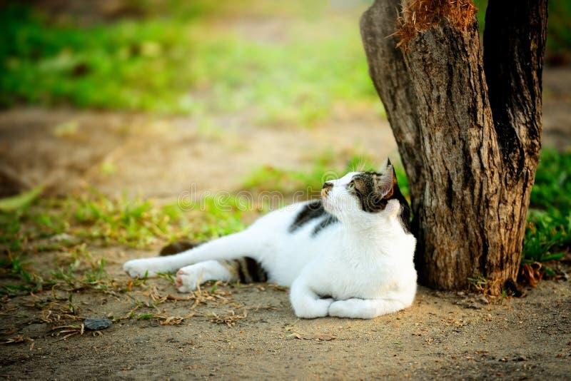 Curious cat lying under the tree. stock photos